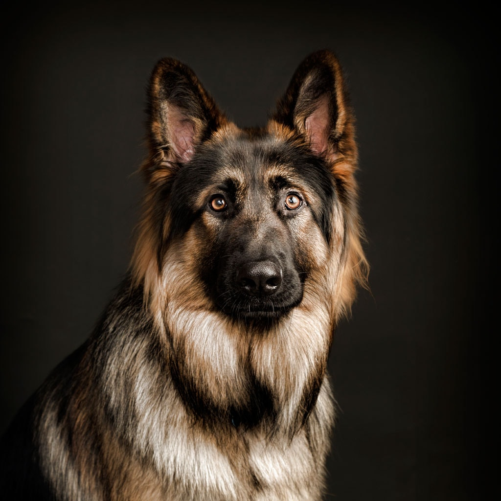 Best Dog Photography Leicester