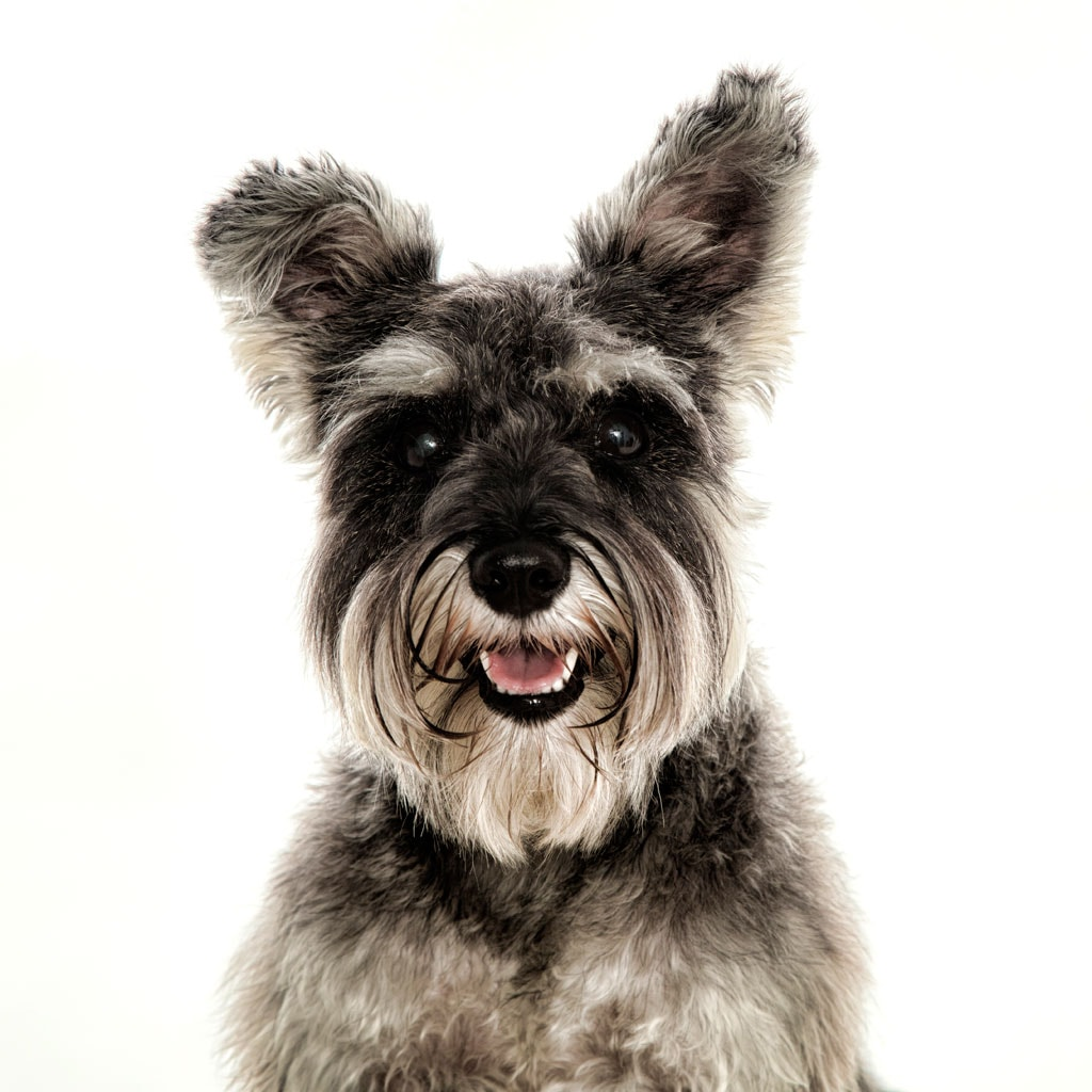 Dog Photography Studio Leicester